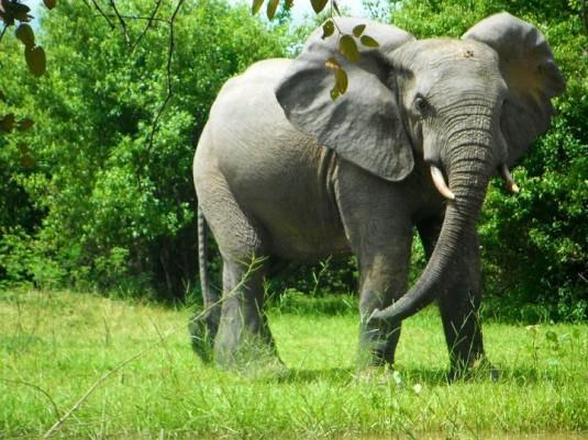Animales en Ghana