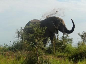 Uganda y su naturaleza