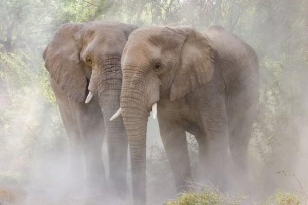 Elefantes y sus cuidados