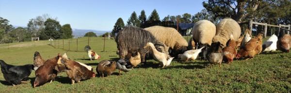 Granjas con animales